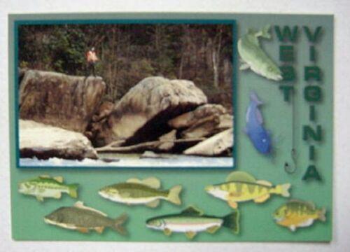 West Virginia Big Fish Postcard