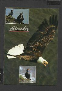 Alaska-Joe-Colour-Postcard-Wild-Birds-of-Alaska-unposted