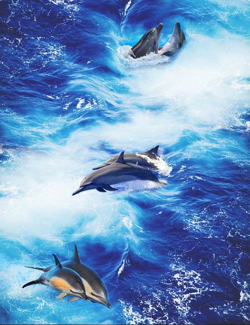 3D 3D 3D Dolphin Ocean 5477 Floor WallPaper Murals Wallpaper Mural Print AJ AU Lemon c976ff