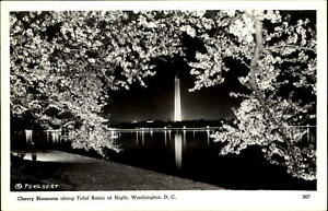 Cherry-Blossoms-at-Tidal-Basin-at-night-Washington-DC-Mainzer-Publ-real-photo