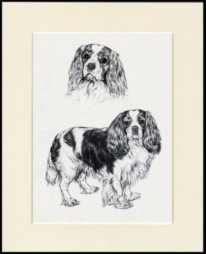 CAVALIER KING CHARLES SPANIEL LOVELY DOG SKETCH PRINT MOUNTED READY TO FRAME