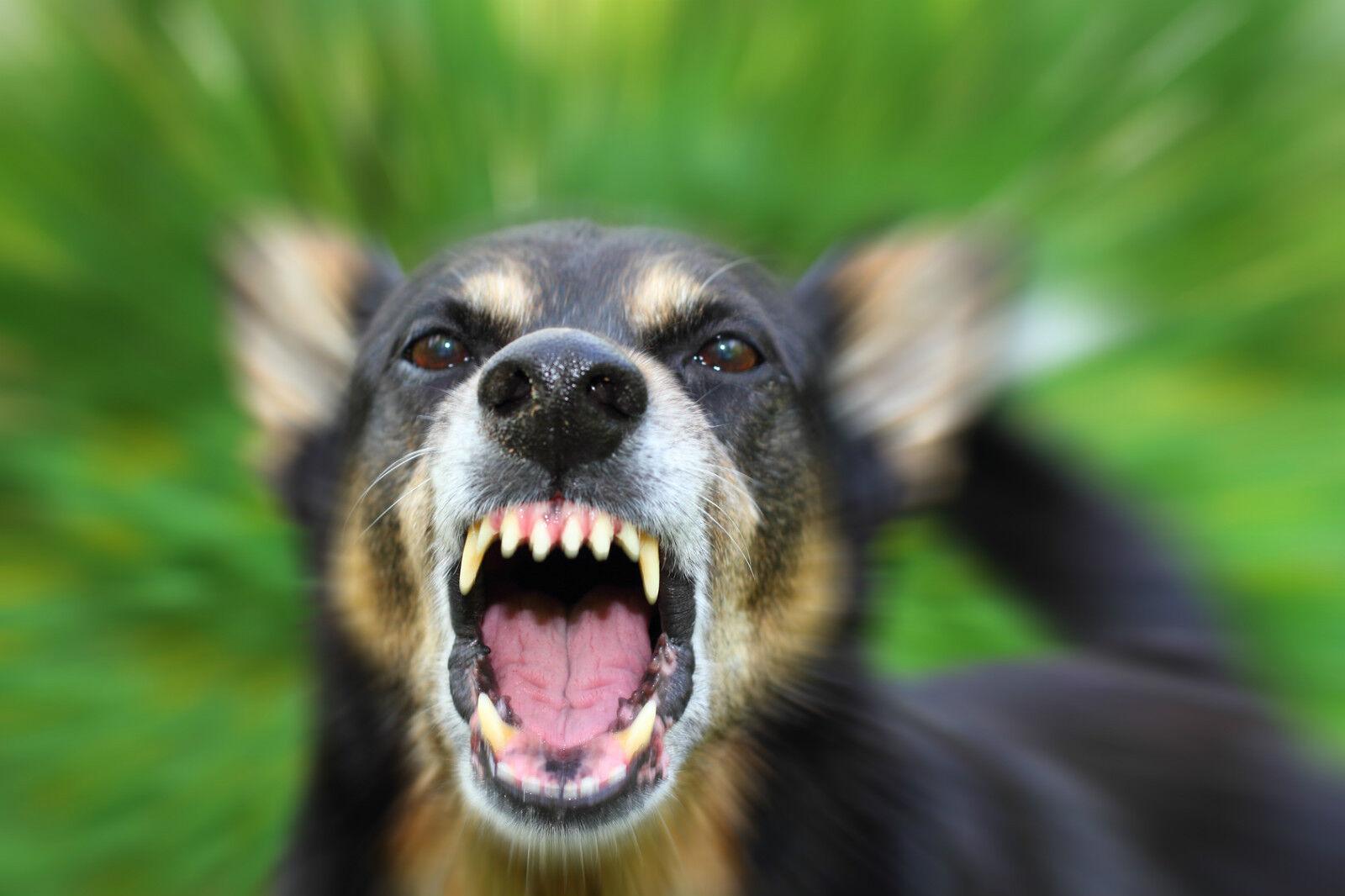 2x ISOTRONIC Raccoon Schreck – Battery Powered Dog Shock & CAT Distributor