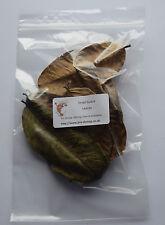 20x foglie essiccate Guava-Naturale Cibo Per Gamberetti Betta Discus antibatterico