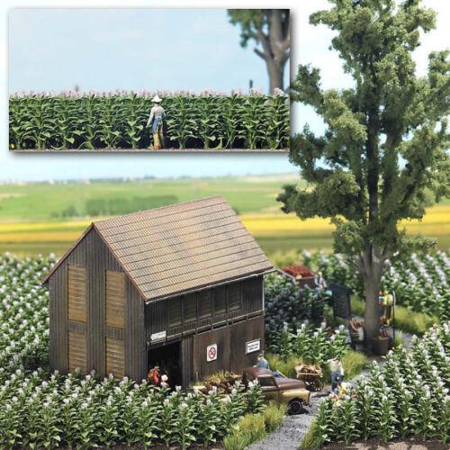 Busch 1221 NEW TOBACCO PLANTS