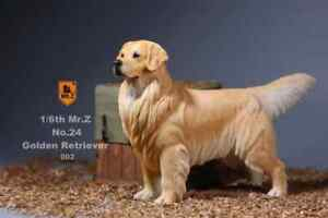 Mr-Z-1-6-Scale-Animal-Model-Dog-Golden-Retriever