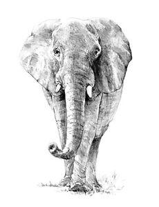 Sketching Skizzieren Malen Mit Bleistift Elefant 24cm X 33cm