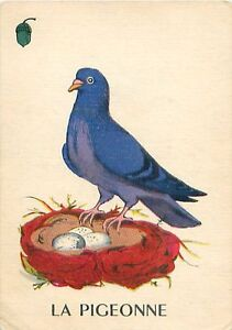 ANCIENNE-IMAGE-OLD-CARD-Taube-PIGEON-PIGEONNE-PALOMA