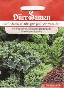 Rotkohl Mohrenkopf Brassica oleracea capitata rubra  ca Seeds 200 Korn