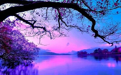 Stunning Purple Pink Warm Sunset Lake Black Tree Landscape Canvas Pictures