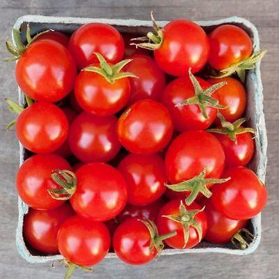 30 RIESENTRAUB TOMATO SEEDS 2020 ~ NON-GMO ~ U.S.A SELLER!