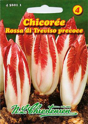 Chicoree 'Rossa di Trevisio precoce' - Cichorium endivia  Samen 456011