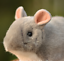 24cm Emulational Chinchilla Lanigera Stuffed Plush Toys Mouse Animal Doll