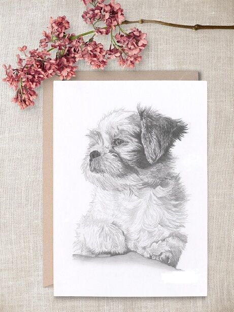 SHIH TZU dog Ltd Edition art drawing prints  2 sizes A4//A3 /&  Card Available