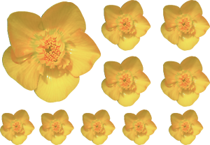Buttercup flowers Vinyl Decals Stickers Nursery doors Wall Window Decoration