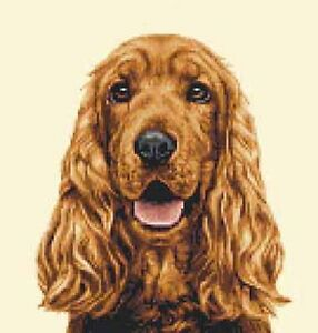 golden cocker spaniel puppies fluffy friends pinterest golden cocker spaniel dog full counted cross stitch kit