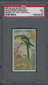 1889-N5-Allen-amp-Ginter-Birds-of-the-Tropics-Alexandrine-Ring-Graded-PSA-5