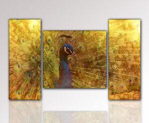 designbilder wandbild pfau abstrakt modern wohnzimmer