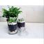 Glasshouse-Tahaa-380g-Soy-Candle-Vanilla-Caramel-TripleScented-Handmade-FreePost thumbnail 9