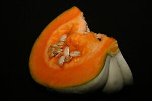 UK-Pumpkin-Butternut-Sweet-Gourd-Winter-Squash-Misti-Kumra-10-Seeds