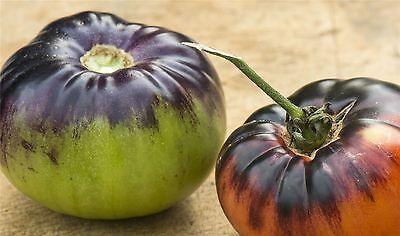 Vegetable - Tomato - Indigo Blue Beauty - 10 Seeds