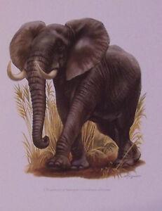 PLANCHE-ANCIENNE-MAMMIFERE-L-039-ELEPHANT-D-039-AFRIQUE
