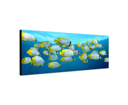 150x50cm Schmetterlingsfisch Panorama Karibik Falterfisch Leinwand Sinus Art