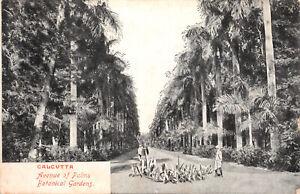 R334236 Calcutta. Avenue of Palms. Botanical Gardens. G. Valsecchi. and Co. 1908