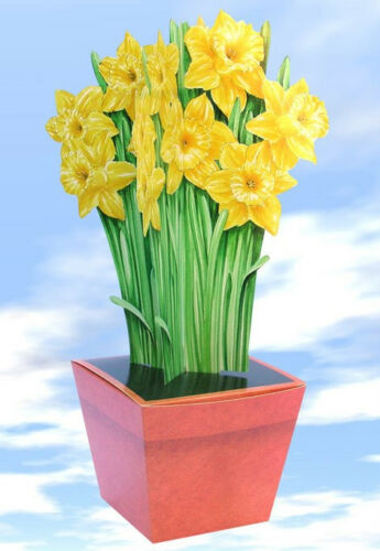 Large Daffodil Terracotta Gift Box-wrapping paper