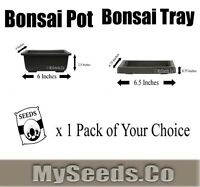 1 Set X Bonsai Pot & Humidity Tray With Free Pack Of Seed Of Your Choice 6x4x2.5