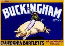 Vacaville Buckingham Cowboy Riding Pig Bartlett Pear Fruit Crate Label Art Print