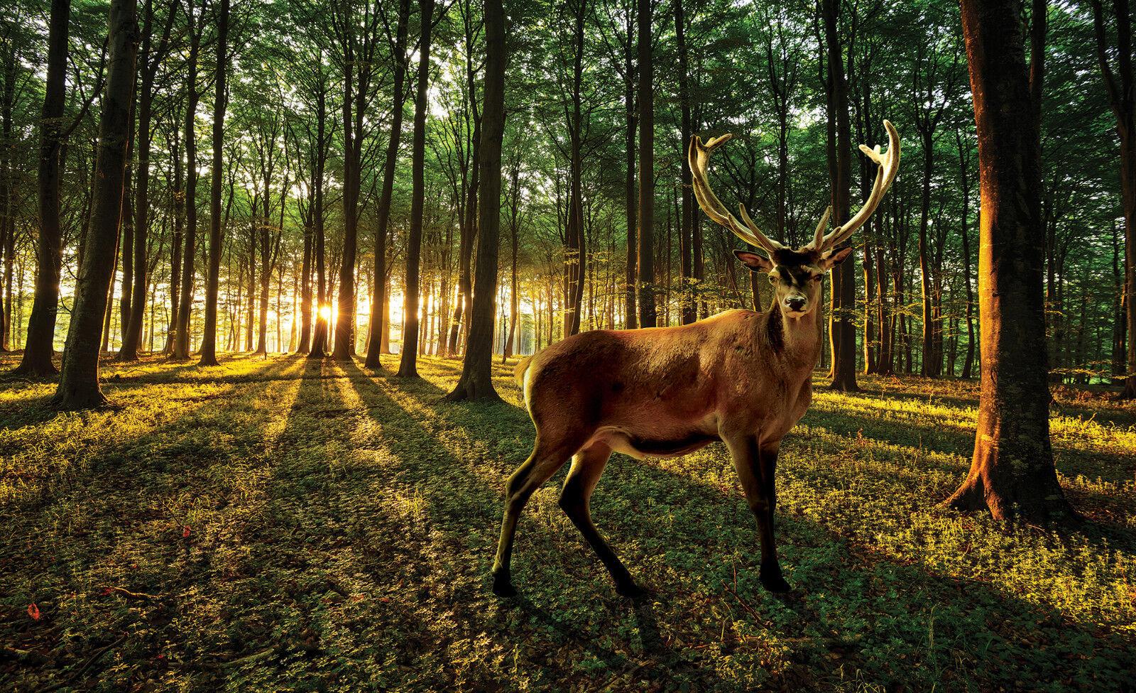 VLIES Fototapete-ROTHIRSCH-(3194)-Edel-Hirsch Rotwild Wald Bach Tier Jagd Wald