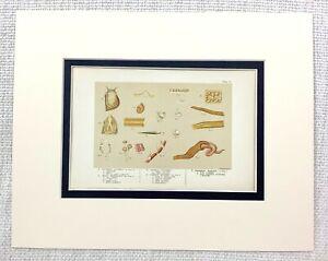 1855 Antico Stampa Mare Creatures Animali Oceano Naturale Storia 19th Secolo