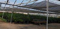 Agfabric 55% Uv Pp Woven Shade Panel For Greenhouse Pergola Black 10'x16'
