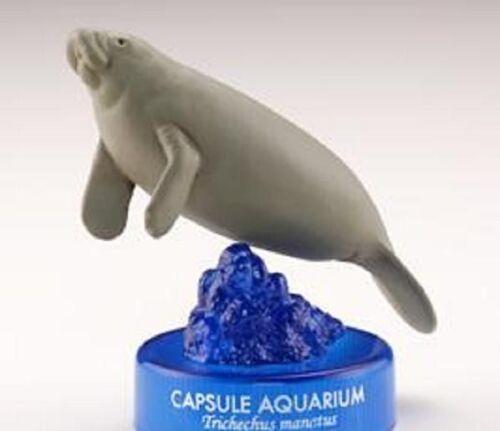 RARE Retired Kaiyodo Japan Capsule Aquarium Caribbean Manatee Marine Figure