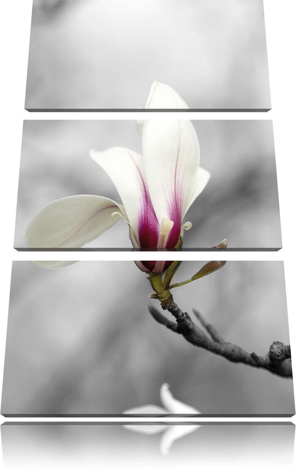 Fiori Magnolia su Albero 3-Teiler Quadro Tel Decorazione Parete Stampa Artistica