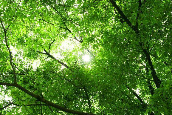 3D Saftig grüne Blätter 88 Fototapeten Wandbild Fototapete BildTapete Familie DE