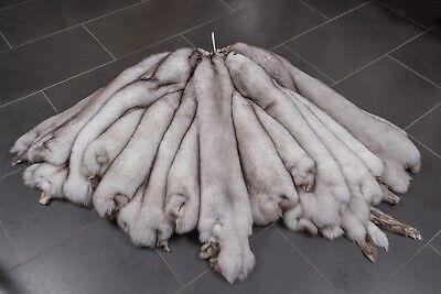 5309 Natural Blue Foxes Skins Real Fur | Naturelle Blaufüchse Felle Blaufuchs Reinweiß Und LichtdurchläSsig