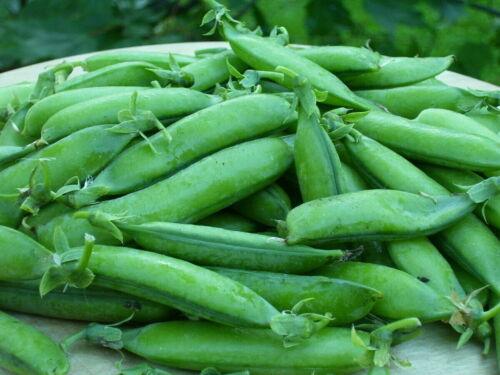 Details about  /20Pcs Cowpea Pea Pisum Sativum Seeds Plants Mixed Vegetable Sweet Organic Grass