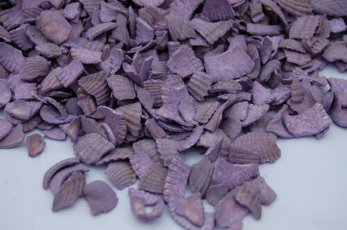 Lavender Sea Shells Table Garden Plants Craft Pebbles Nuggets Glass Path Pourri