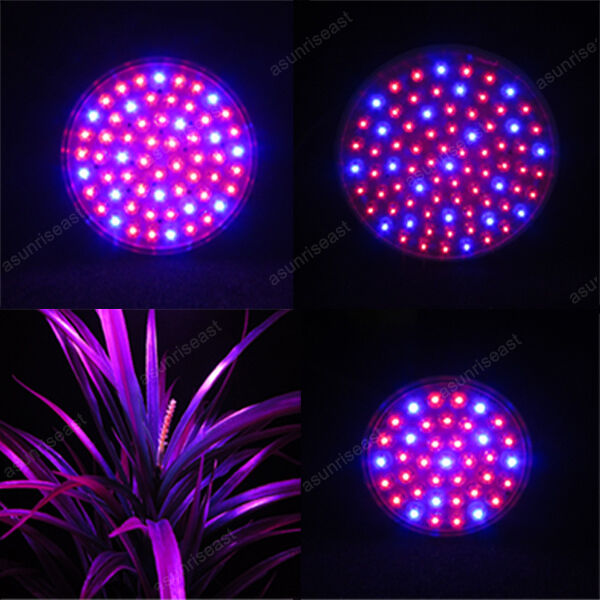 E27 Red Blue Hydroponic LED Plant Grow Light AC110 AC220V 38 60 80 LEDs