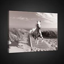 CANVAS WANDBILD LEINWANDBILD FOTO PFERD STRAND HOLZ HIMMEL NATUR SAND 3FX2307O1