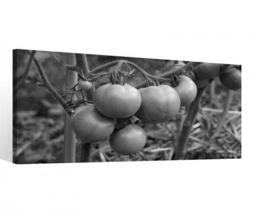 Leinwand 1 Tlg schwarz weiß Tomaten Pflanze Garten Bilder Wandbild Obst 9C243