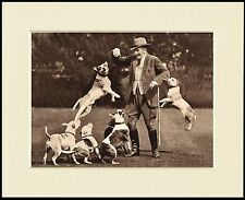 TOM WALL AND HIS STAFFORDSHIRE BULL TERRIER DOGS PRINT READY MOUNTED