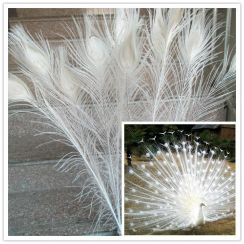 10-100 pcs White natural peacock feathers 28-32inch//70-80cm Carnival Diy costume