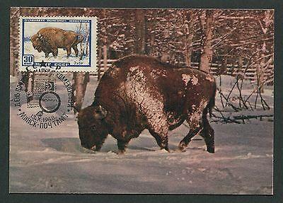 Briefmarken Russia Mk 1968 Fauna Bison Wisent Maximumkarte Carte Maximum Card Mc Cm D5814 100% Hochwertige Materialien