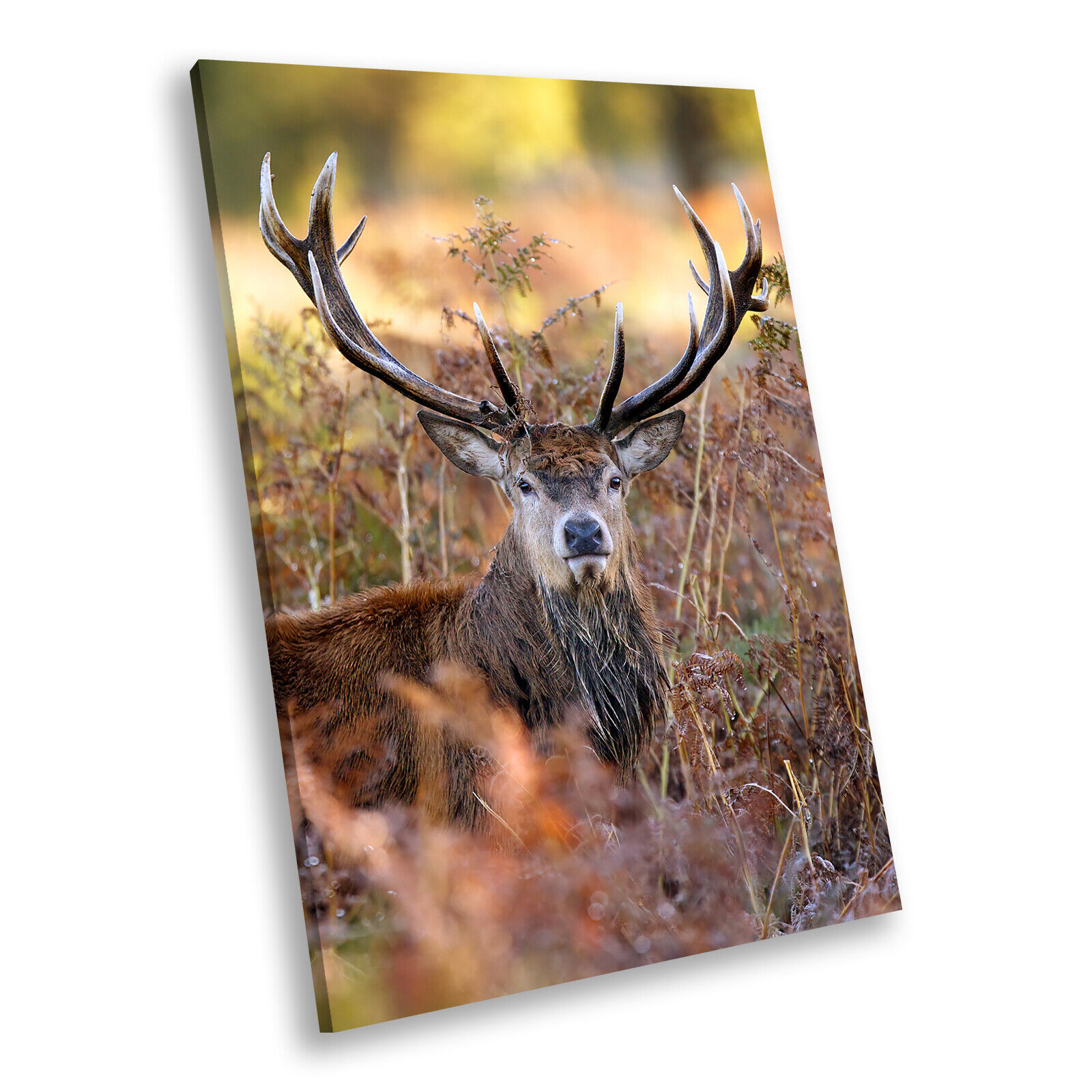 braun Stag Deer Grün  Portrait Animal Canvas Wall Art Large Picture Prints