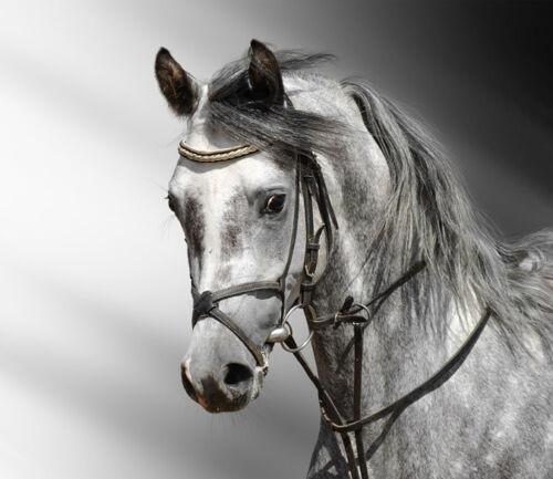 3D Handsome horses 1 WallPaper Murals Wall Print Decal Wall Deco AJ WALLPAPER