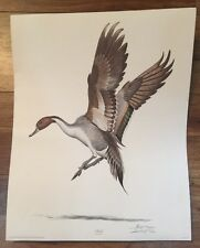 Ray Harm Wildlife Artist Pintail Duck Print Signed