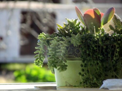 Indoor Plant Design: Combining Houseplants for Interesting ...