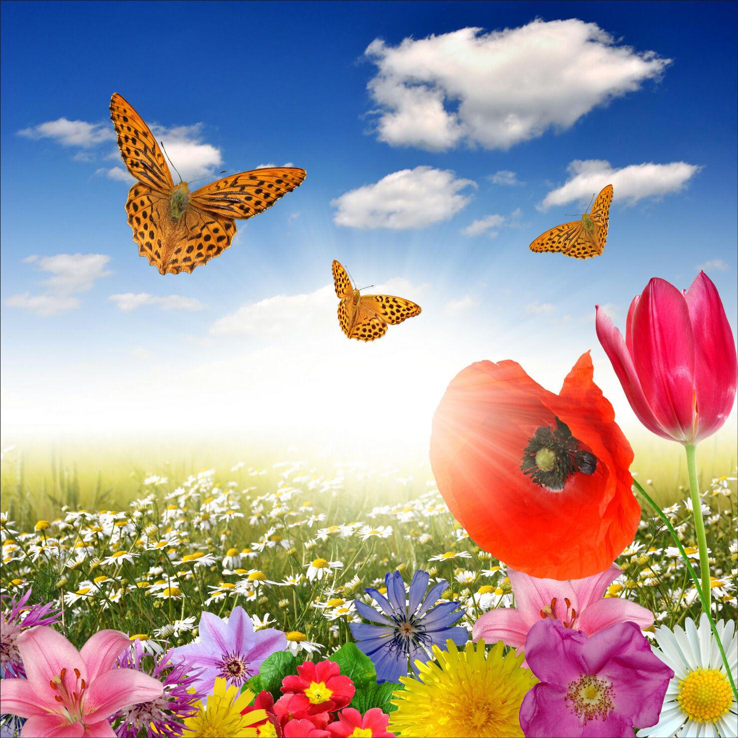 Sticker mural autocollant déco : : : Papillon fleurs - réf 1211 (25 diHommes sions)   De La Mode    Brillance De Couleur    élégante  c3dee1